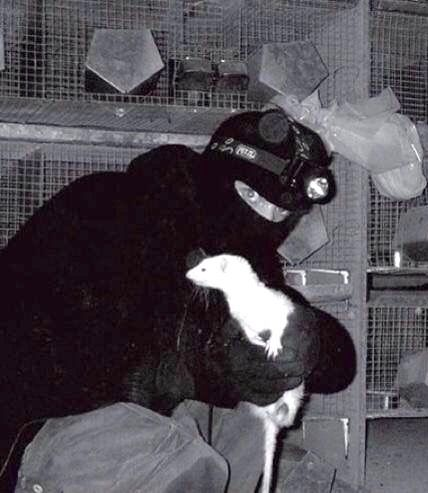 The Animal Liberation Front - Radical Animal Rights Activism By Any Means Necessary!