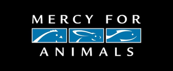 Exclusive Interview With Nathan Runkle Of Mercy For Animals