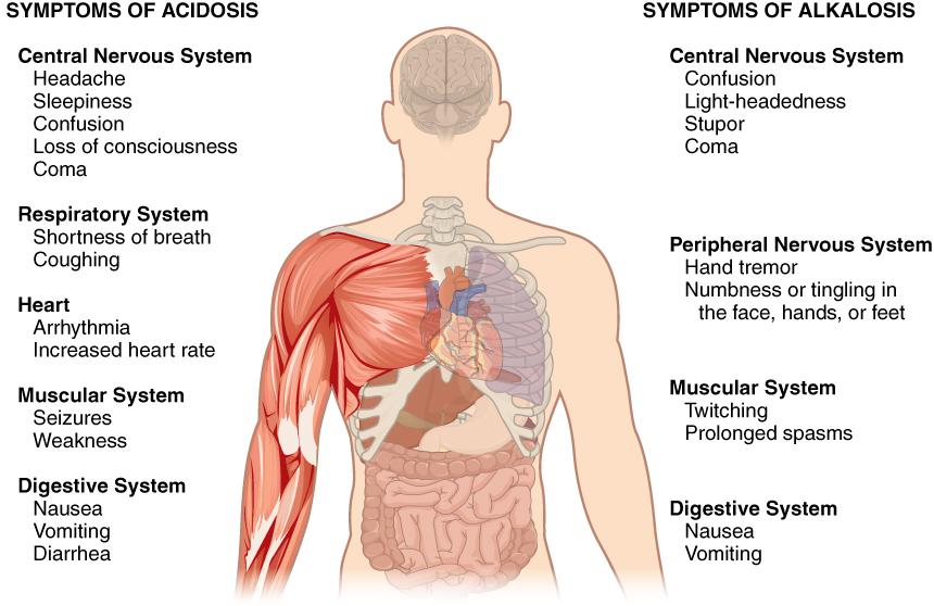2716_Symptoms_of_Acidosis_Alkalosis.jpg