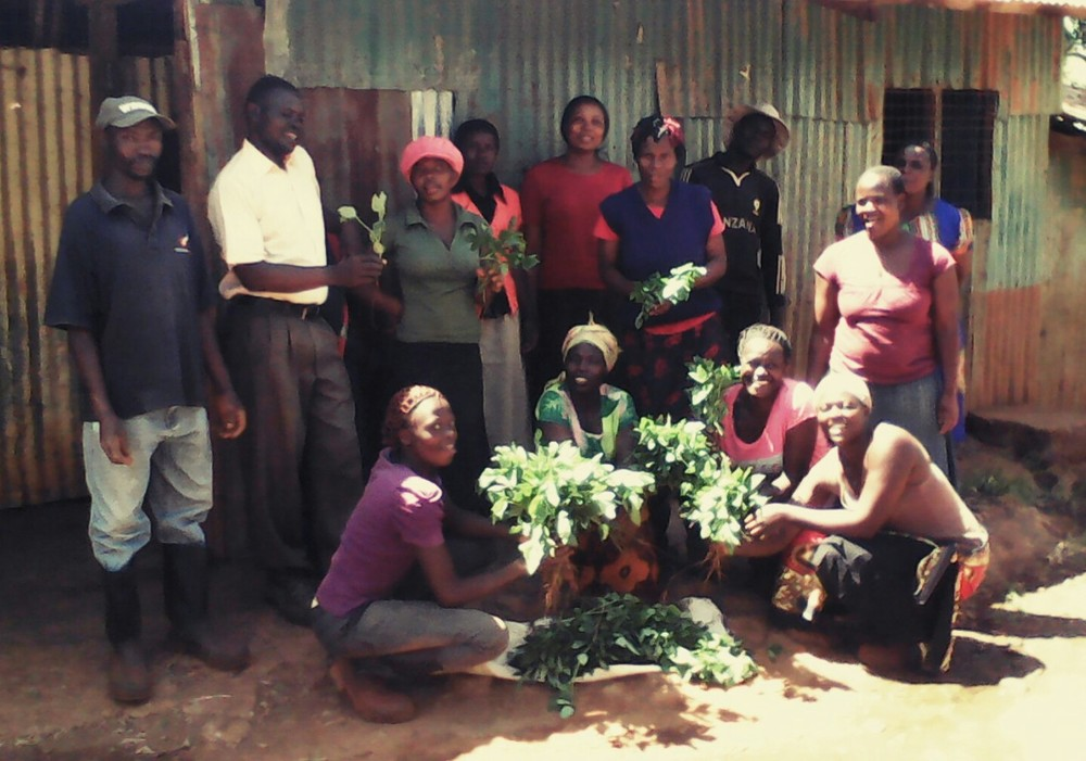 Our 'parents' team in Kangemi with their first harvest.