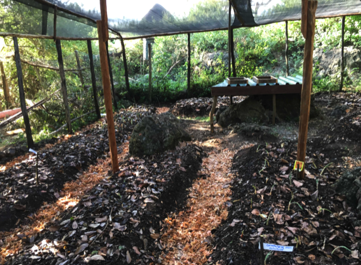 mfangao shade 2.png