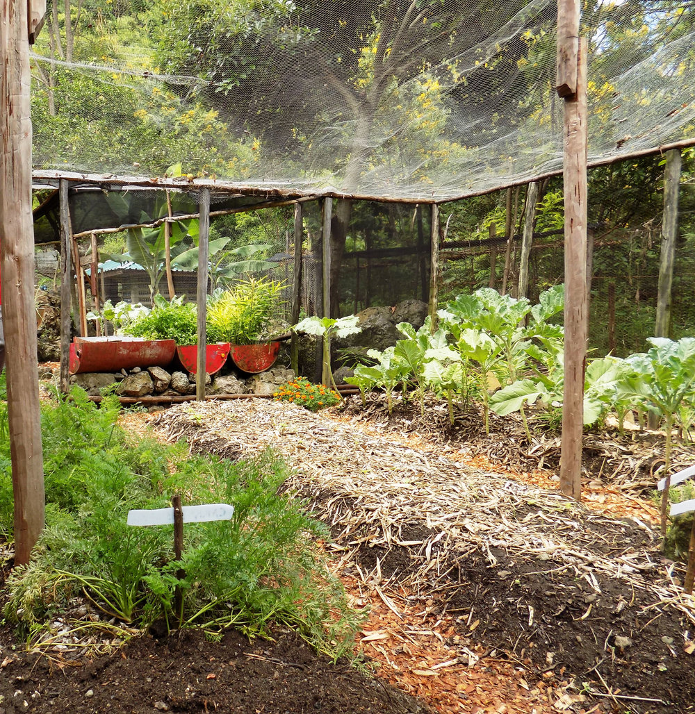 Developing an organic vegetable garden