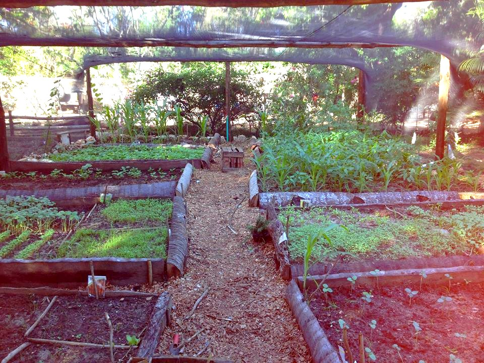 Thriving food garden | Distant Relatives Eco Lodge