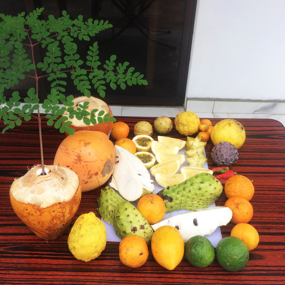 Fruit abundance in the Seychelles