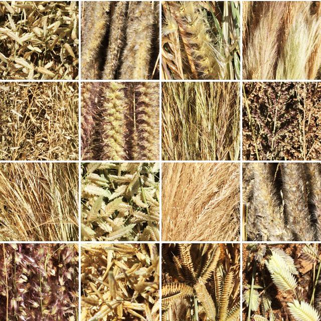 Grass Seed Varieties