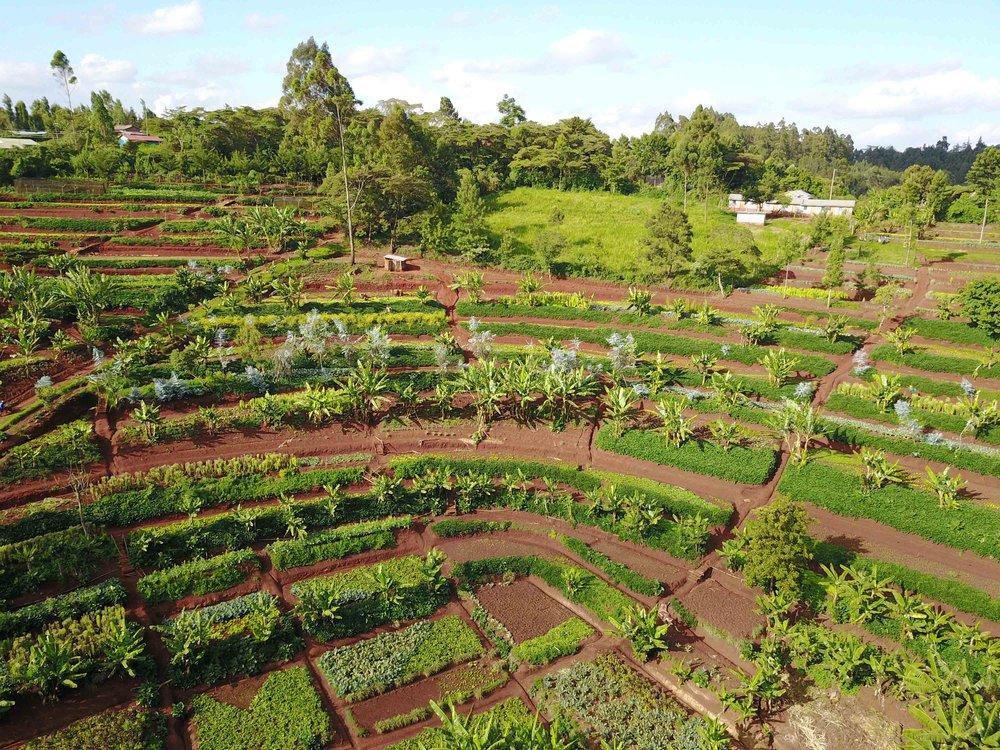 Mlango Farm