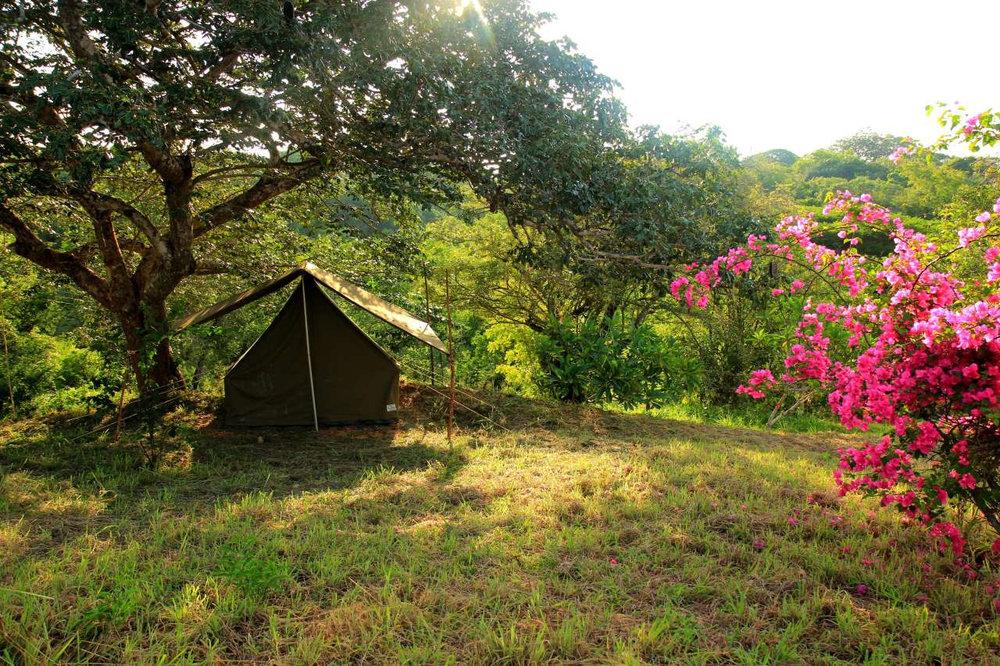 DR safari tent.jpg