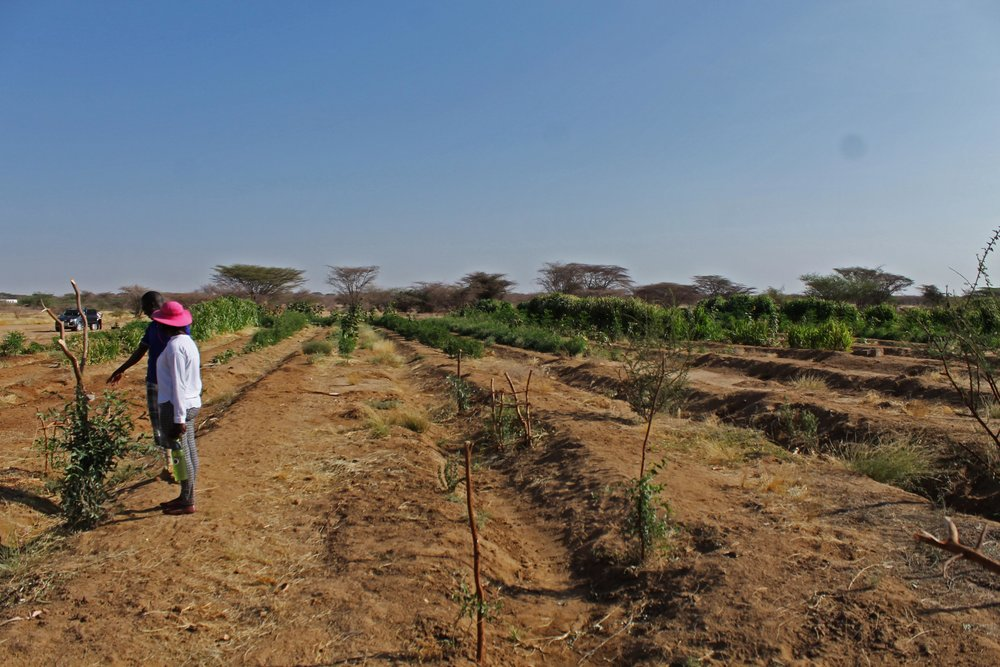 Turkana Demonstration Farm