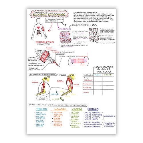 Colección de Apuntes de Medicina — Sarah Clifford Illustration
