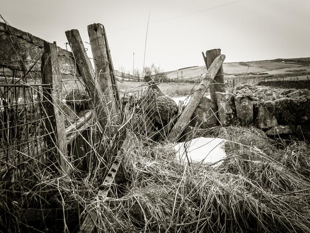 other_landscape-6.jpg