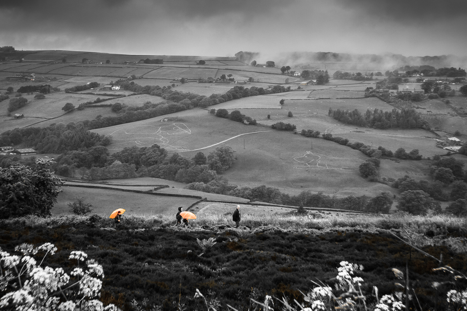 Dash of Orange on a Dull Day (See The Shepherd & The Sheepdog)