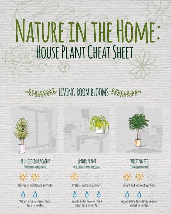 Indoor plants infographic.jpg