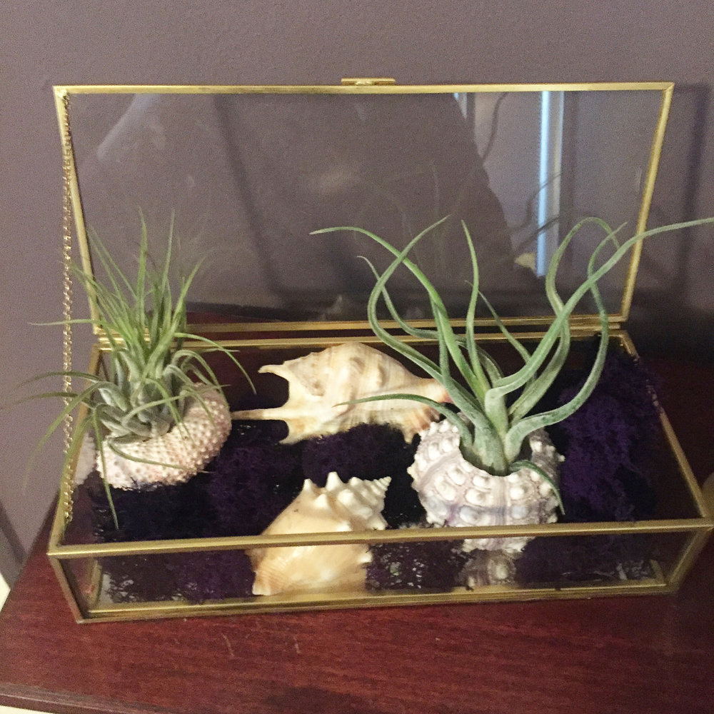 My personal terrarium with special sea urchin shells from the Outer Banks.