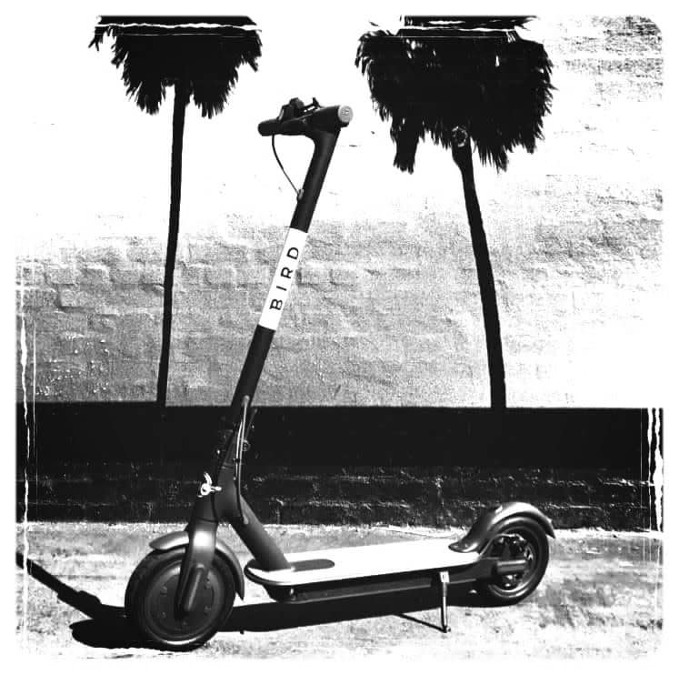 The last mile electric scooter share- the bird