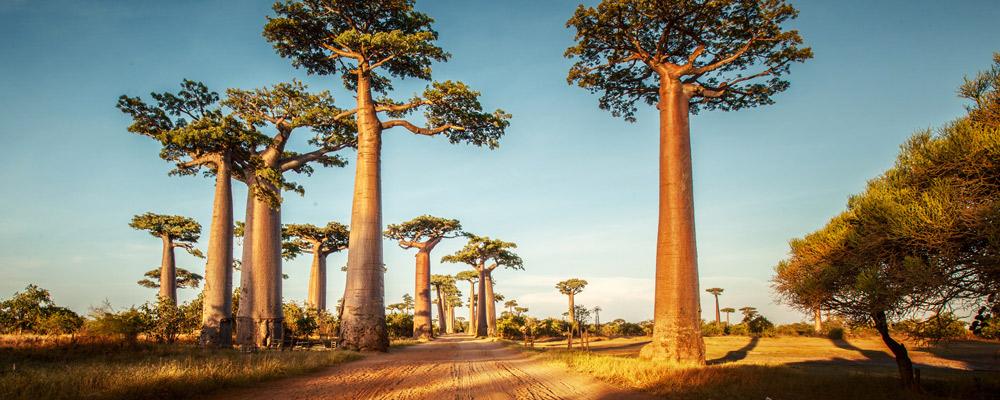 Madagascar - Île