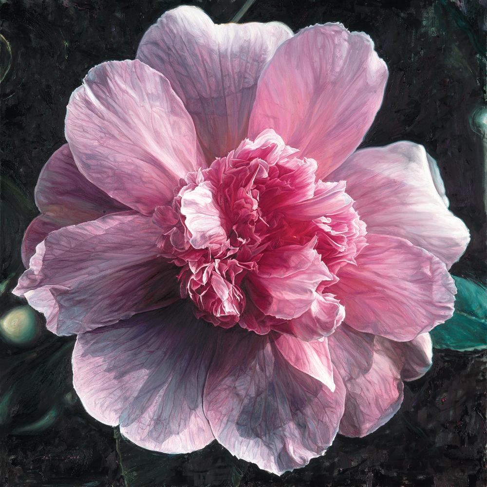Annie's Camellia - 2006