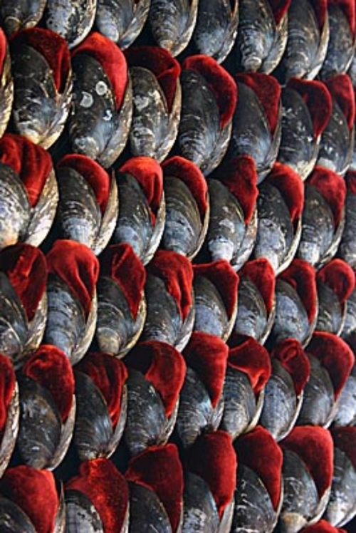 Installation of 20,000 mussel shells inlaid with red silk velvet by Susie Macmurray -  source