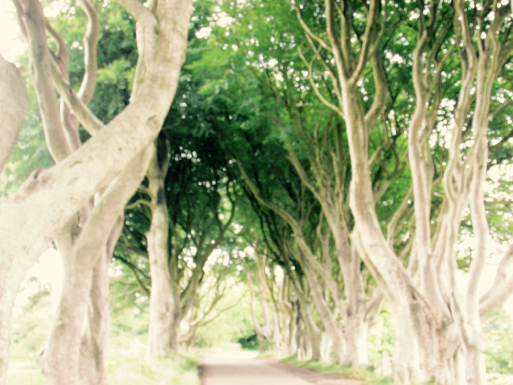 The Dark Hedges, Ballycastle