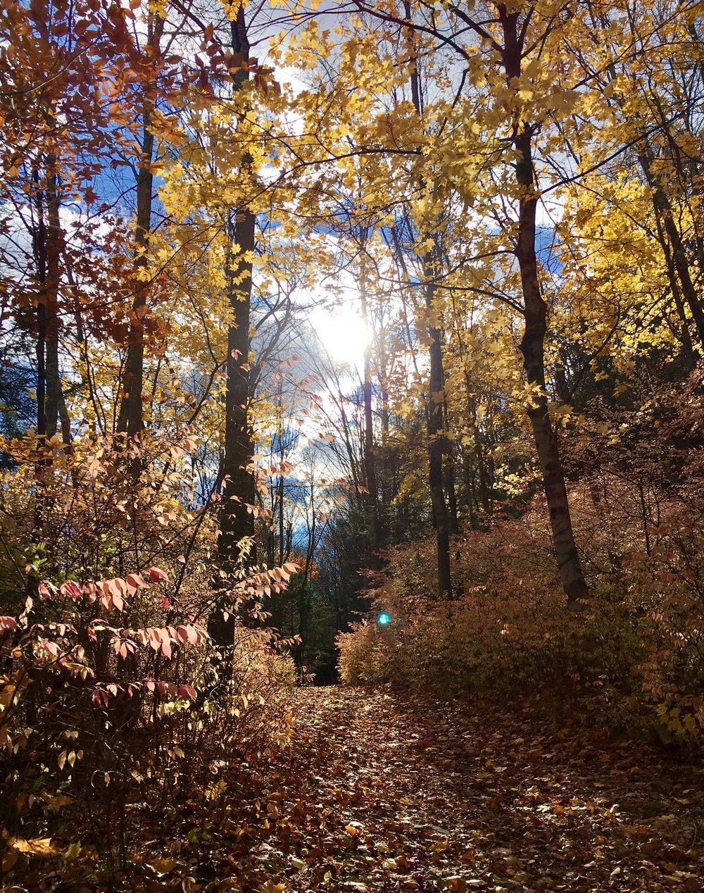 Pequonnock Trail 7.jpg