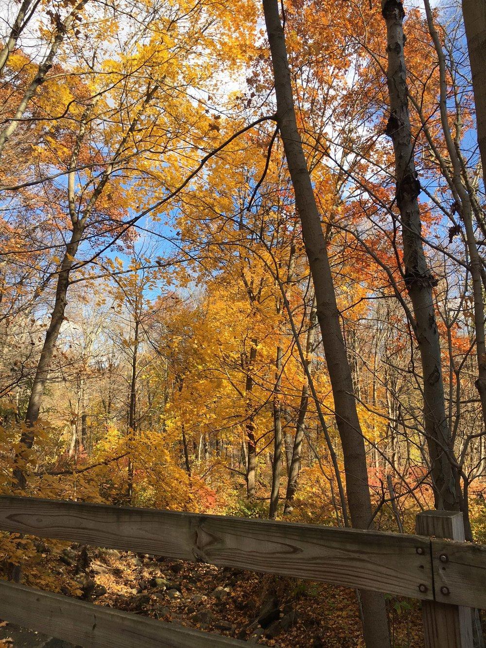 Pequonnock Trail2.JPG