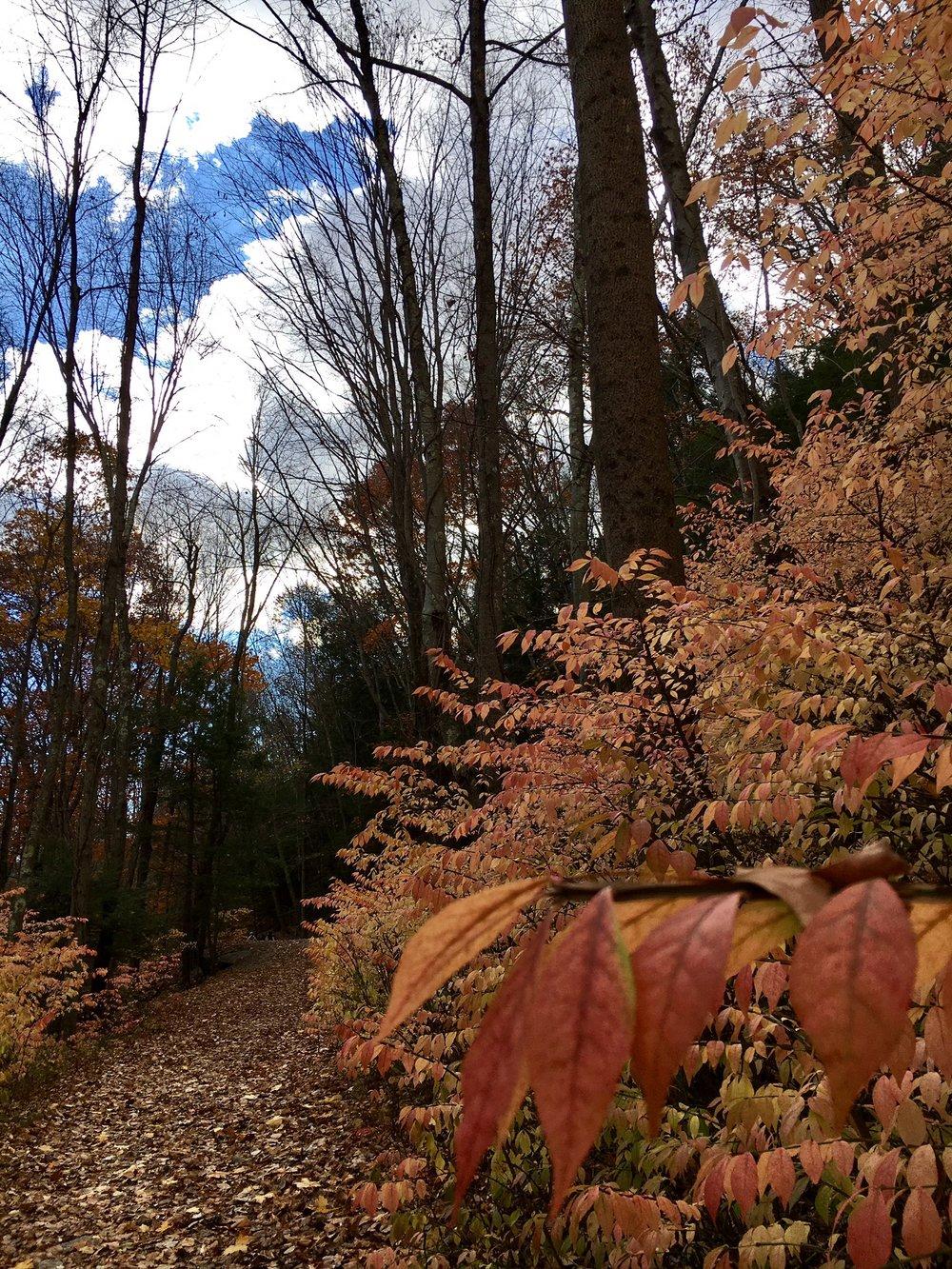Pequonnock Trail5.jpg