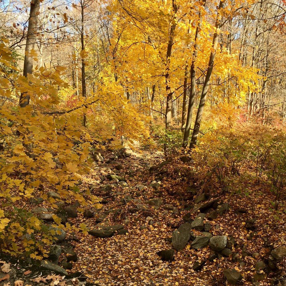 Pequonnock Trail3.jpg