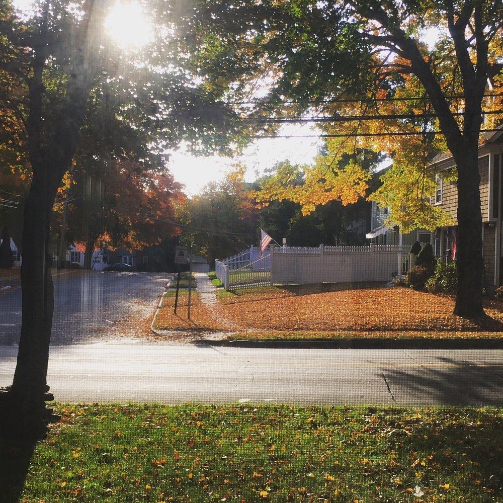 Fall yard 2.JPG