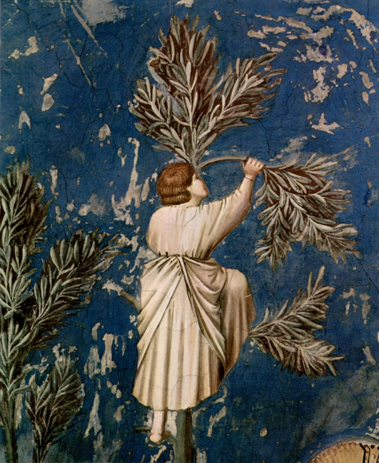 Breaking a Palm Leaf for the Entry Into Jerusalem  by Giotto ( source )