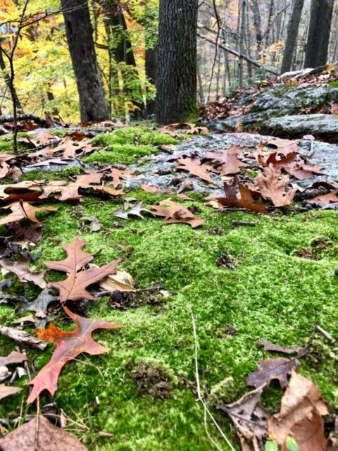 November.Hike5.jpg