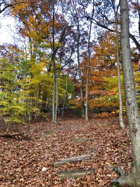 November.Hike14.jpg