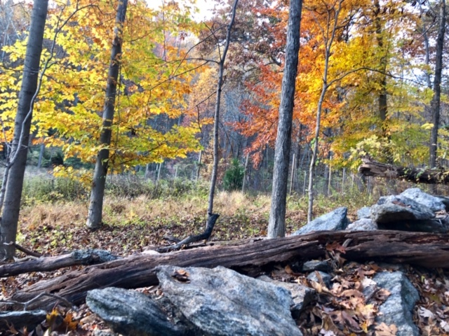 November.Hike11.jpg