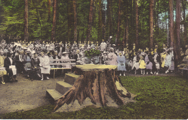 THE STUMP.. love this POSTCARD....