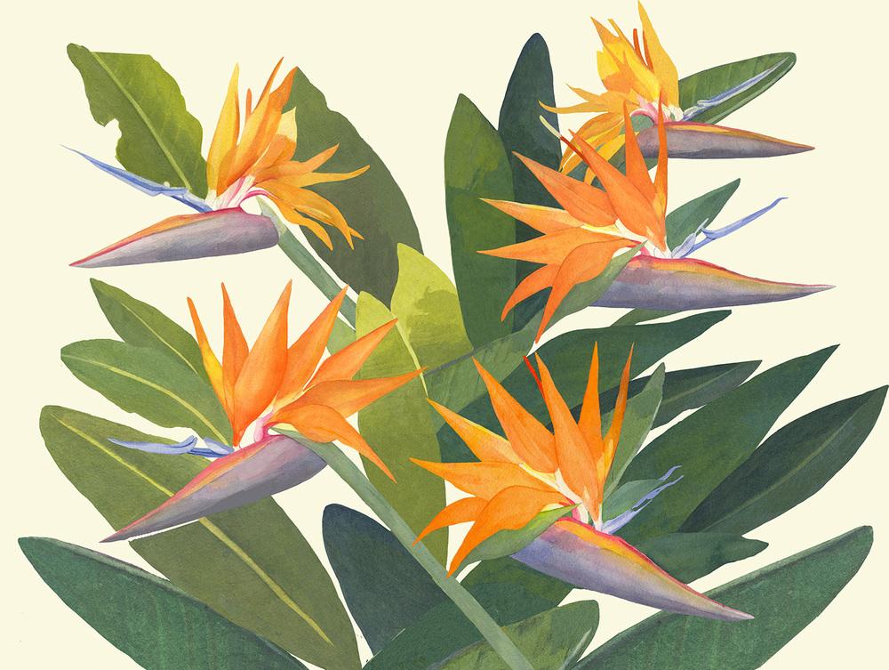 birdsonblue copy.jpg