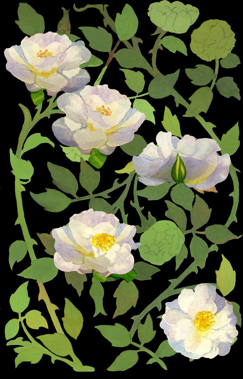 rosevine.jpg