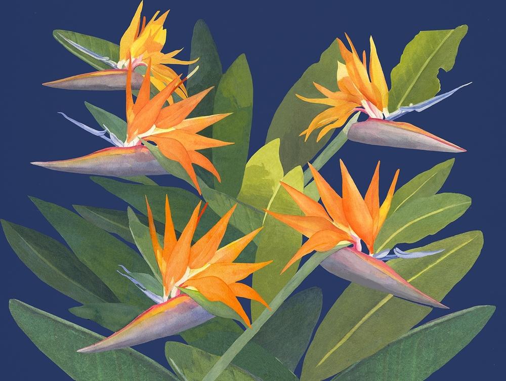 birdsonblue.jpg