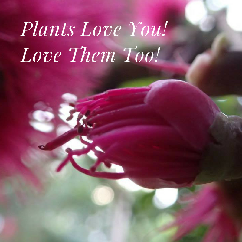 Plants Love You!.png