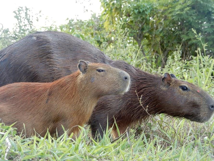 Pacybara (26).JPG