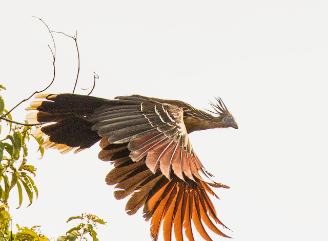 tree bird flying 130A1400-2.jpeg
