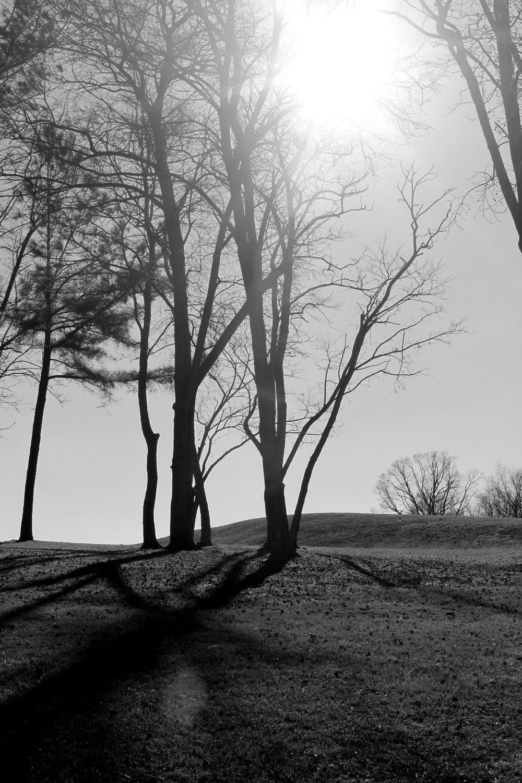 RaleighTrees.jpg