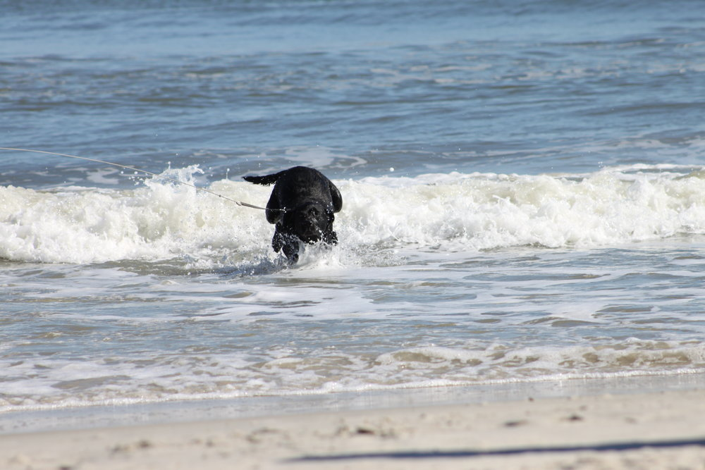 Carolina_Beach_Dog.JPG