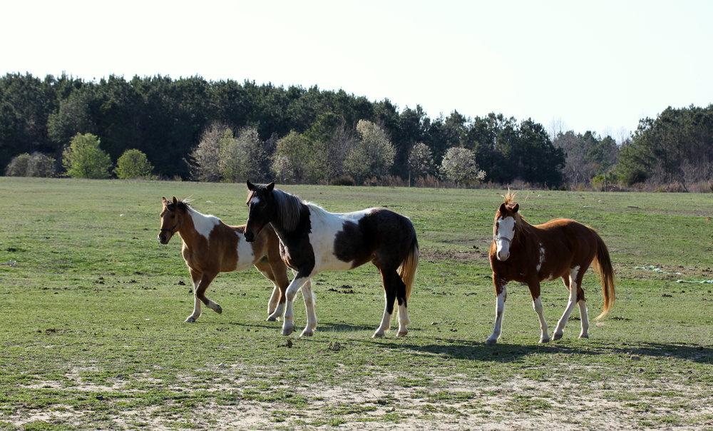 horses in raleigh