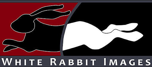 White Rabbit Images