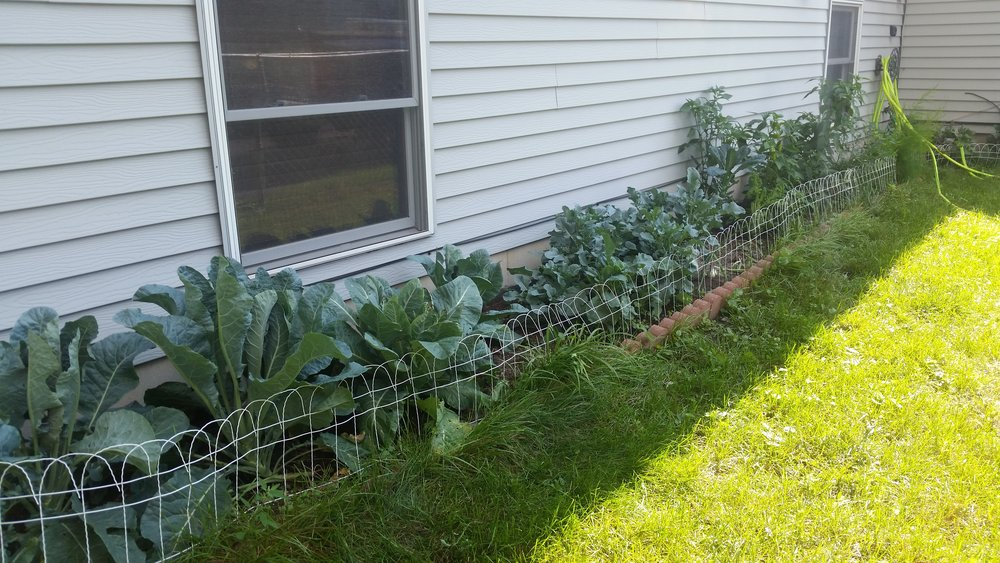 My vegetable garden. In all its glory.