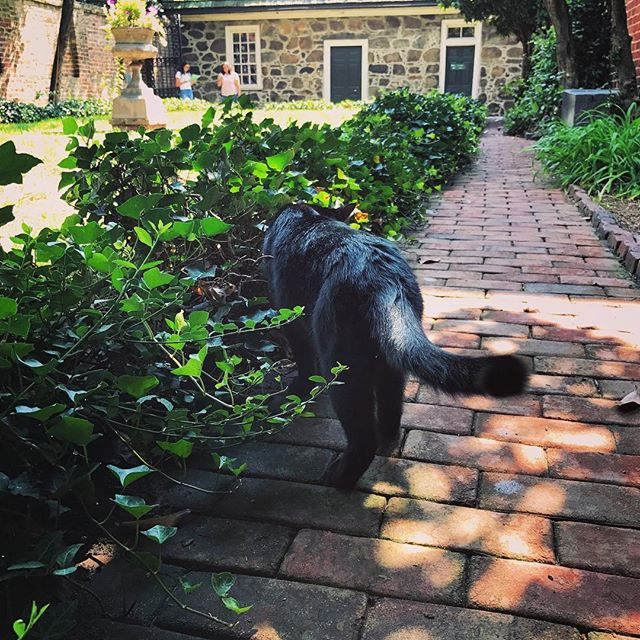 Follow the cat to where Poe is at 💀👻👀🐱 . . . #doirhymeallthetime #no #cat #blackcat #poe #edgarallanpoe #poemuseum #museum #rva #richmond #virginia #hostoricalplace #meow