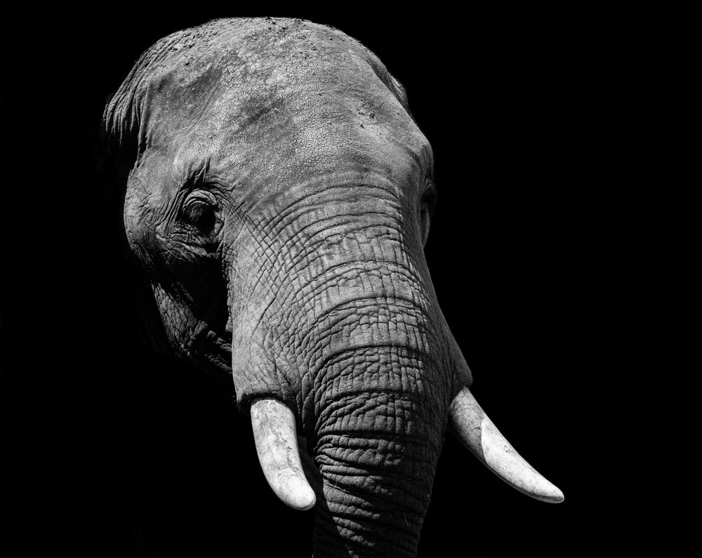 Bring Awareness to the Elephants that Exist in Every Room -