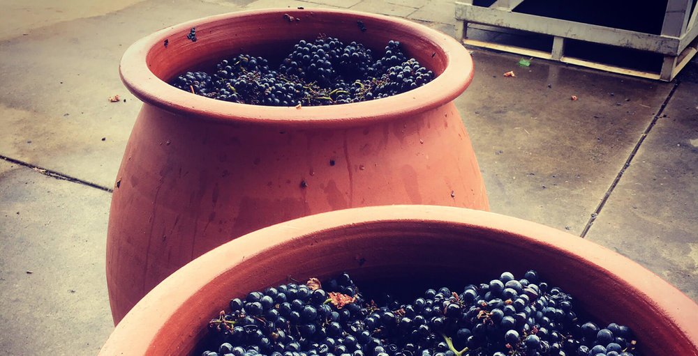 Clay amphorae with grapes  |  AMATO VINO