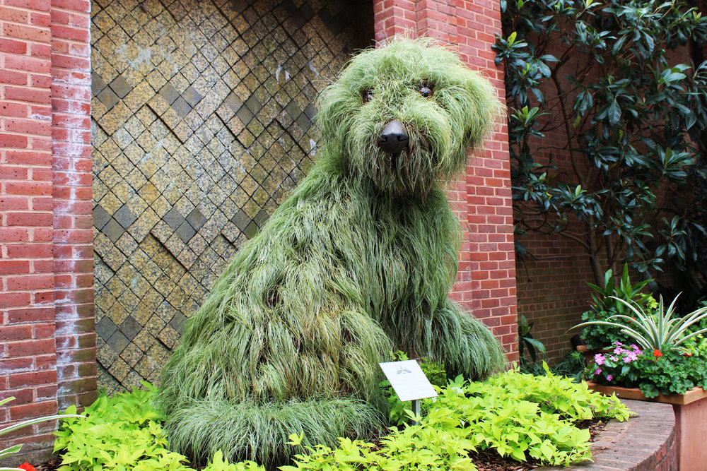 We Recently Went To The Atlanta Botanical Garden. Some Of Our Favorite  Plants/art (plant Art?) :