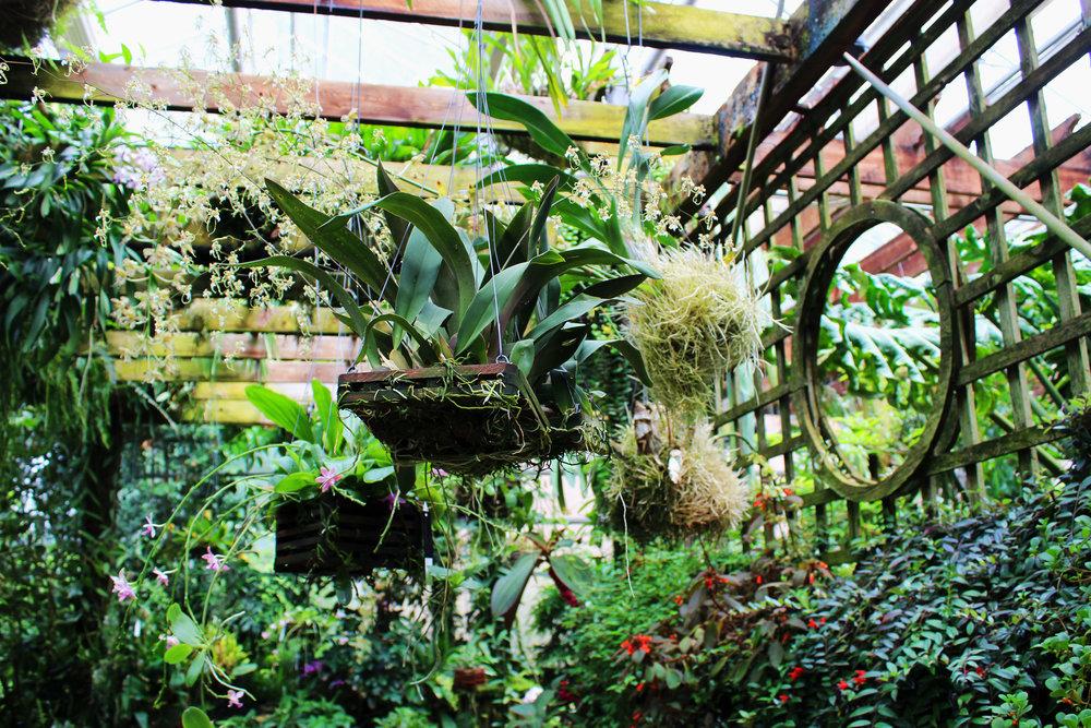 Atlanta Botanical Garden Green House