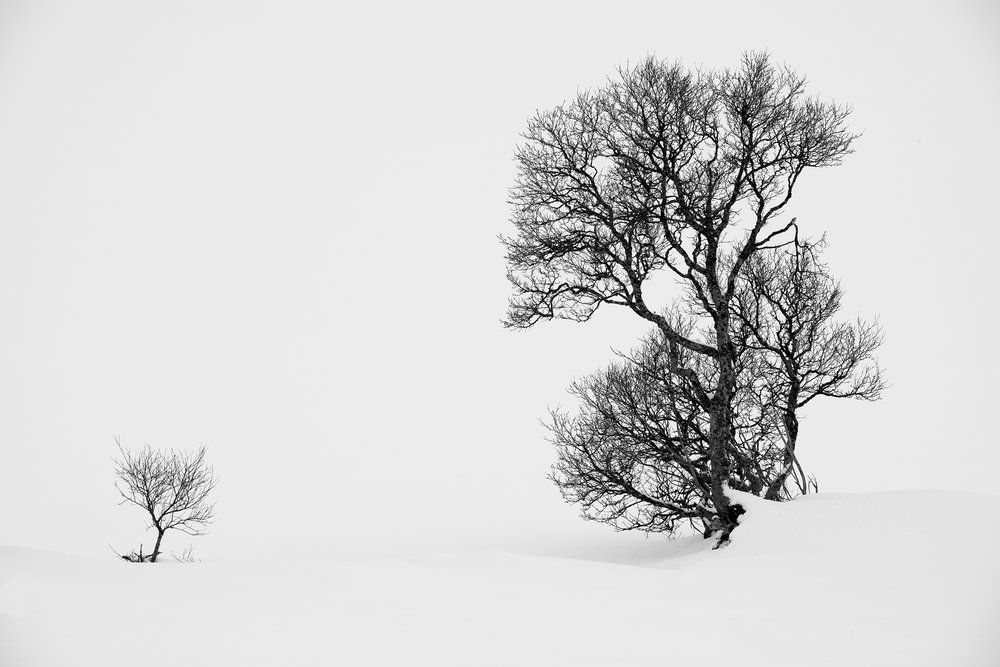 Black White Paul Gallagher Photography