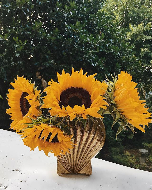 My H&M shell vase is especially pretty with a few Giant Sunflowers.